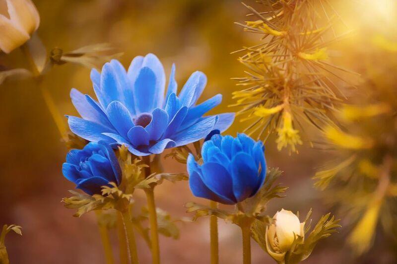 Wild flower from Pierre Gaultier Decor Image