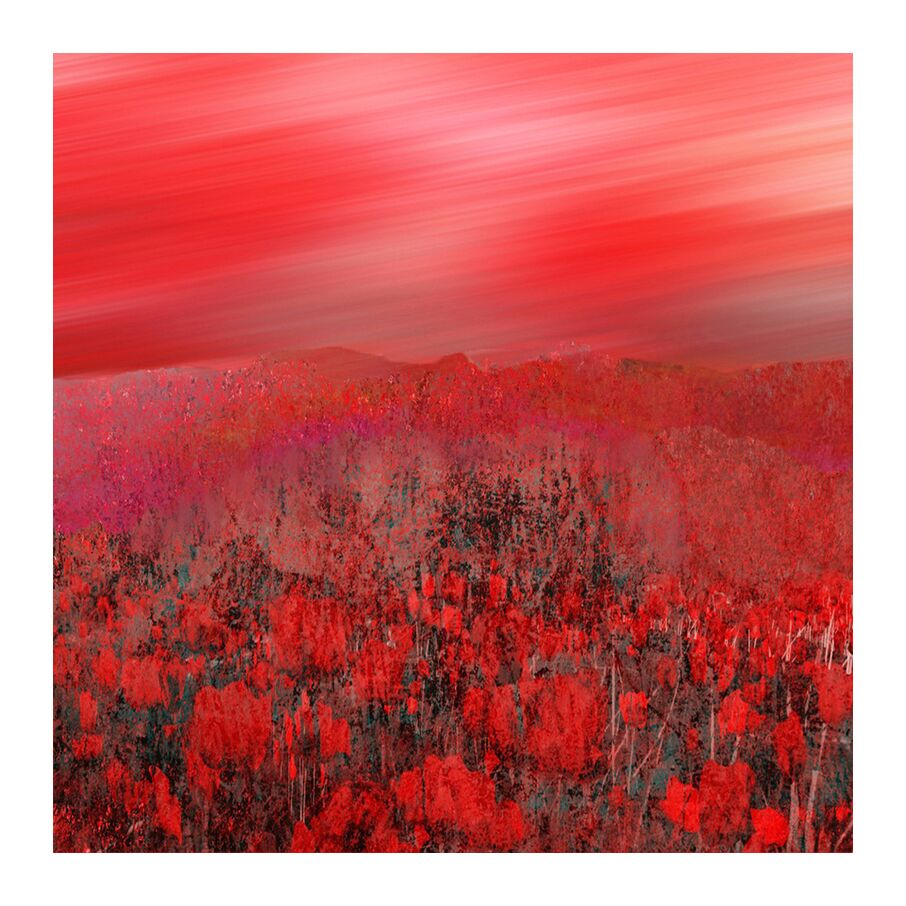 Les coquelicots from claude garcia, Prodi Art, painting, photo, drawing