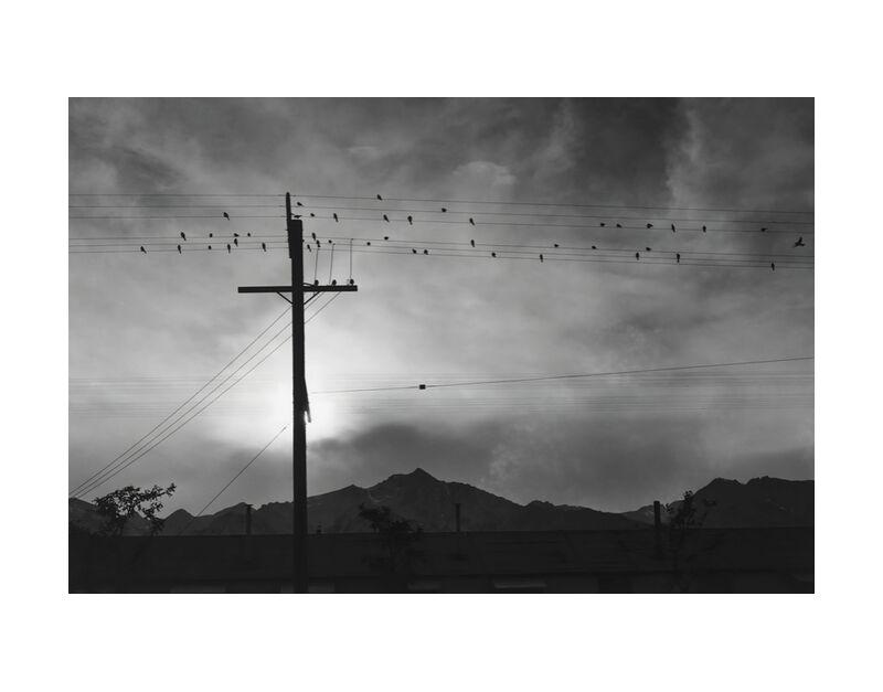 Birds on Wire, Evening - Ansel Adams desde AUX BEAUX-ARTS, Prodi Art, ANSEL ADAMS, montañas, pájaros, cielo, sol, blanco y negro