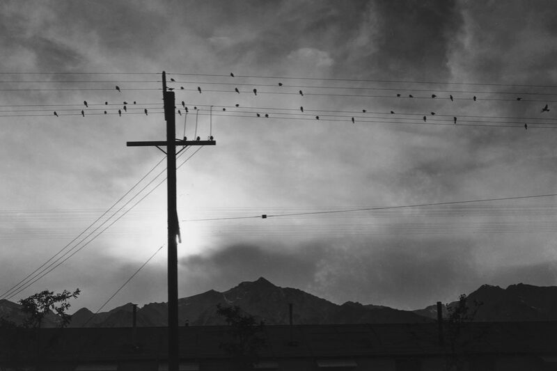 Birds on Wire, Evening - Ansel Adams desde AUX BEAUX-ARTS Decor Image