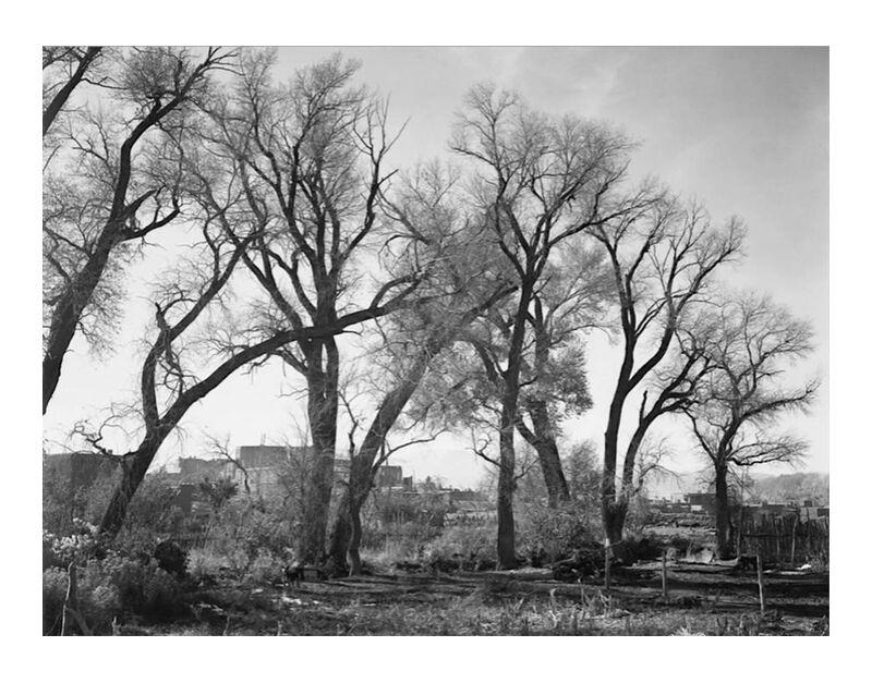 At Taos Pueblo National Historic Landmark - Ansel Adams desde AUX BEAUX-ARTS, Prodi Art, ANSEL ADAMS, blanco y negro, árboles, granja