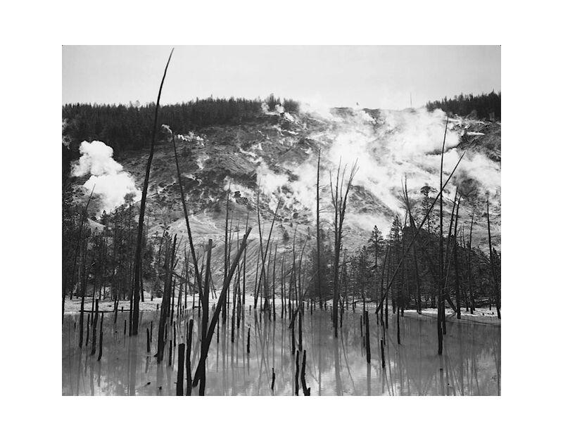 Rocky Mountain National Barren trunks in water near steam rising from mountains - Ansel Adams desde AUX BEAUX-ARTS, Prodi Art, troncs, árboles, vapor, montañas, ANSEL ADAMS