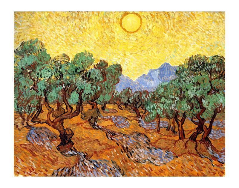 Sun over Olive Grove - Van Gogh desde AUX BEAUX-ARTS, Prodi Art, Van gogh, pintura, paisaje, sol, surco de olivos