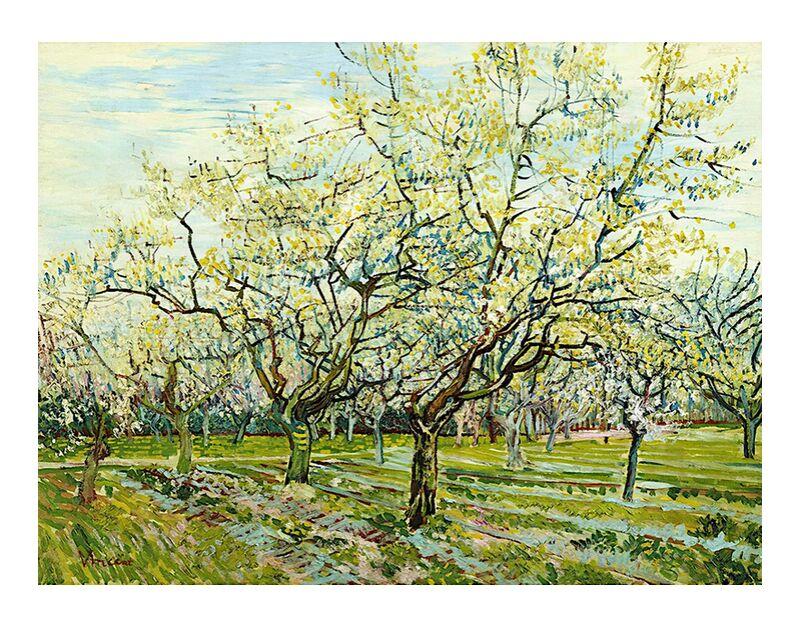 The White Orchard - Van Gogh desde AUX BEAUX-ARTS, Prodi Art, Van gogh, paisaje, agricultura, campesino, Huerta