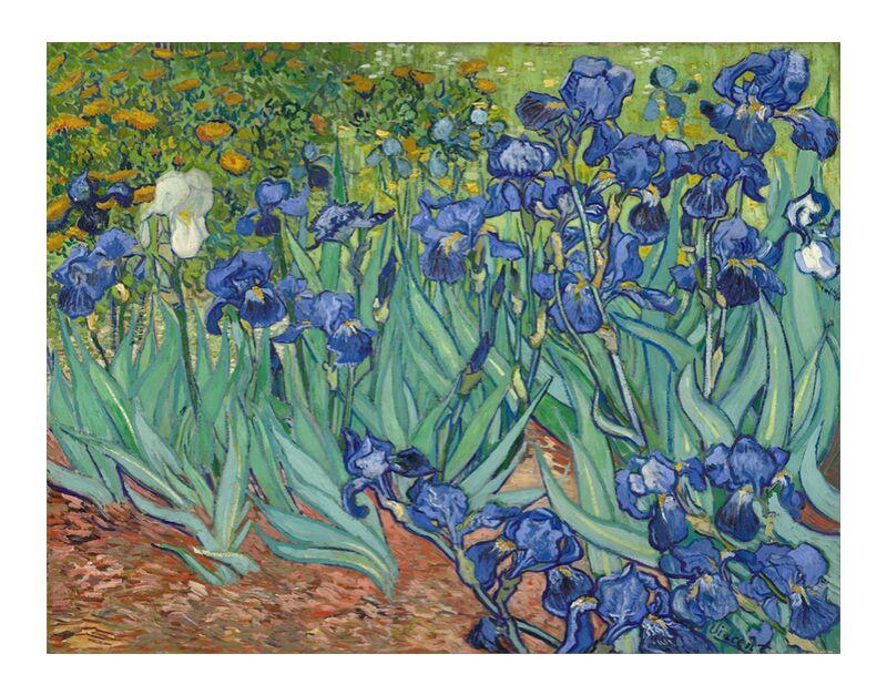Irises - Van Gogh desde AUX BEAUX-ARTS, Prodi Art, Van gogh, pintura, iris, jardín, flores