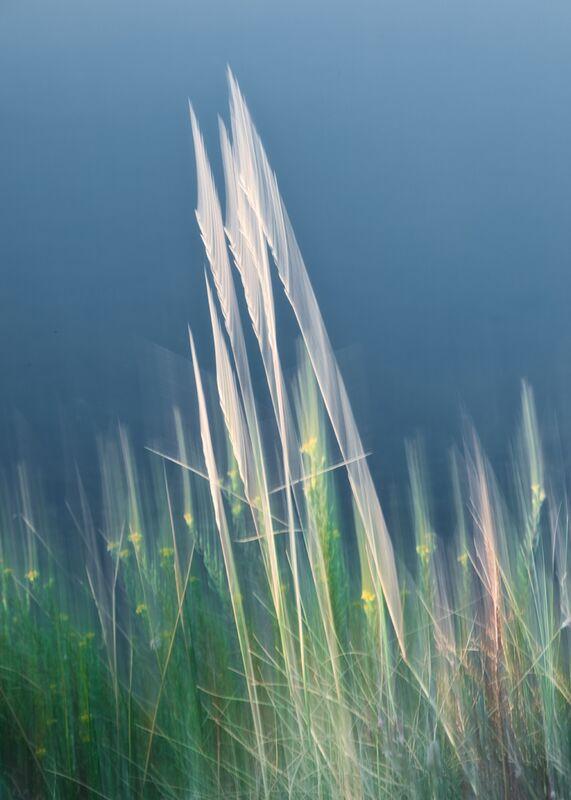 Brin d'herbe folle de Céline Pivoine Eyes Decor Image