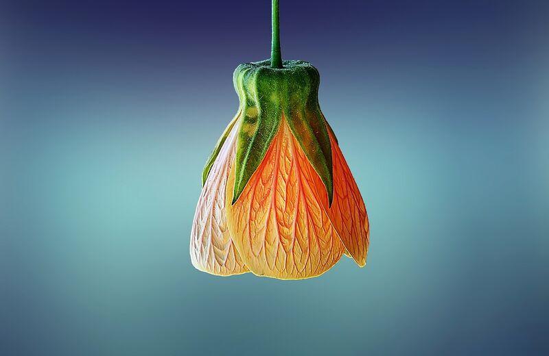 Botanic from Pierre Gaultier Decor Image