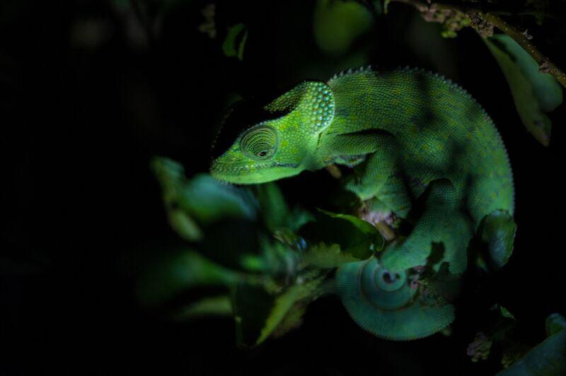 Vert de nuit de Emilie Tournier Decor Image