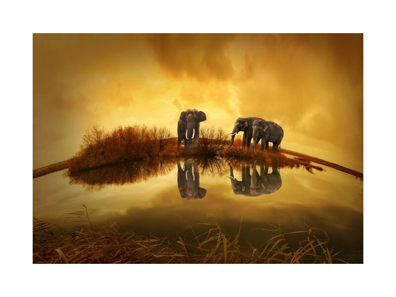 Elephants at the water's edge from Pierre Gaultier, Prodi Art, animals, nature, sunset, elephant, thailand