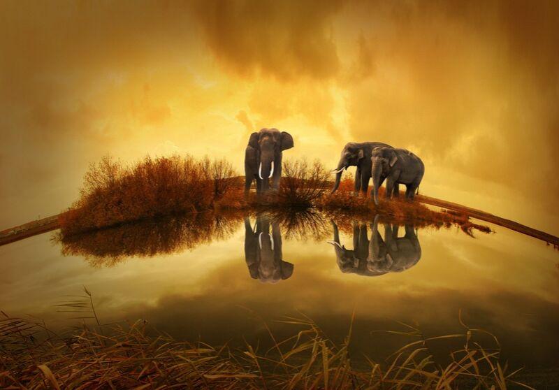 Éléphants au bord de l'eau de Pierre Gaultier Decor Image