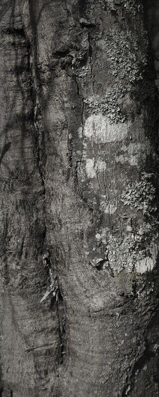 SOUS TA PEAU 3 de jean michel RENAUDIN Decor Image