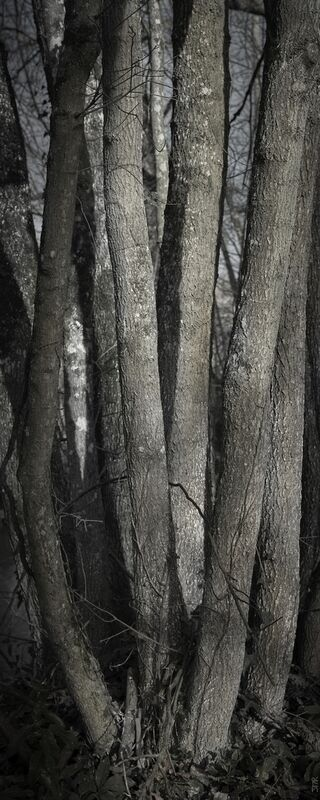 SOUS TA PEAU 1 de jean michel RENAUDIN Decor Image