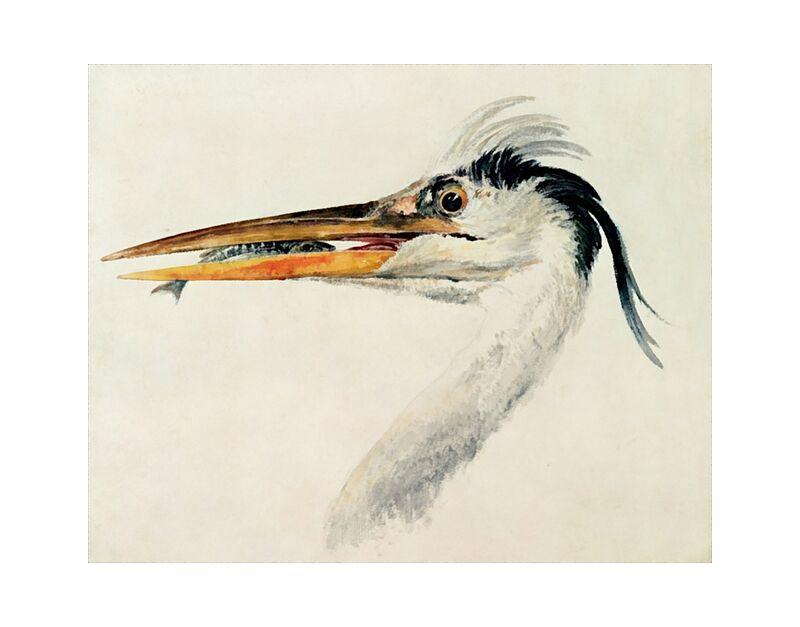Heron with a Fish - TURNER desde AUX BEAUX-ARTS, Prodi Art, TORNERO, garza, pescado, pintura
