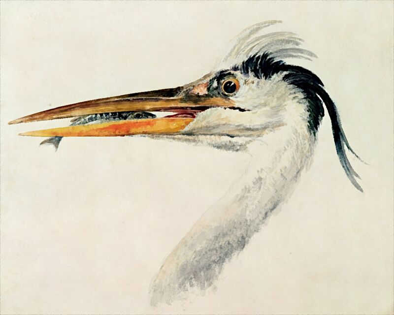 Heron with a Fish - TURNER from AUX BEAUX-ARTS Decor Image