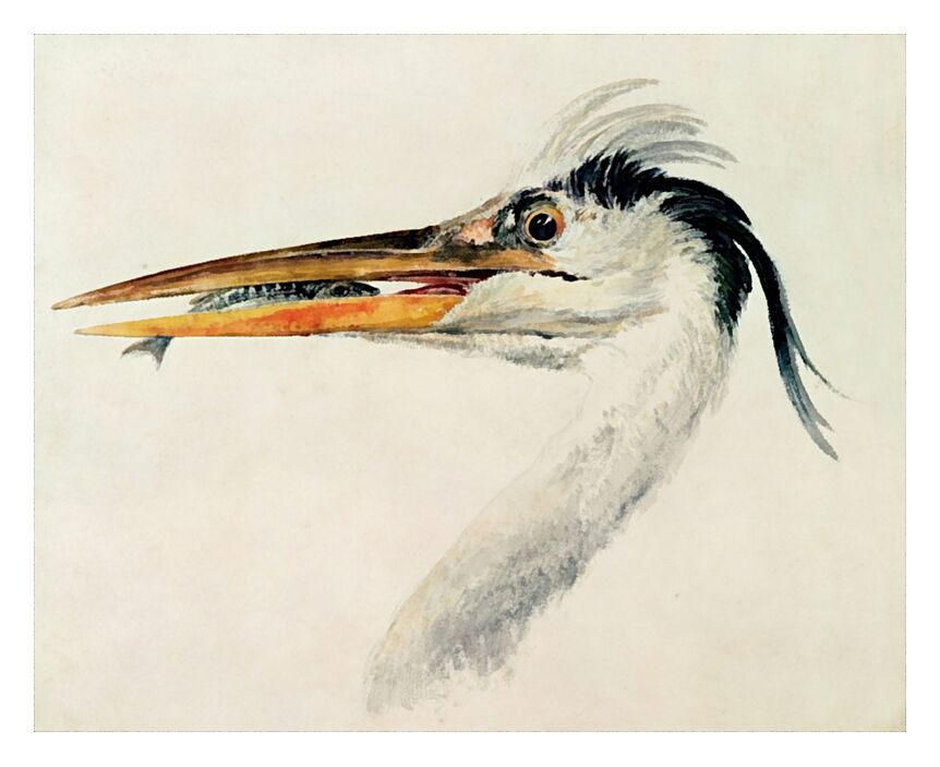 Heron with a Fish - TURNER from AUX BEAUX-ARTS, Prodi Art, TURNER, heron, fish, painting