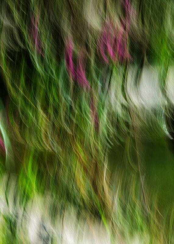 Le buisson ardent de Céline Pivoine Eyes Decor Image