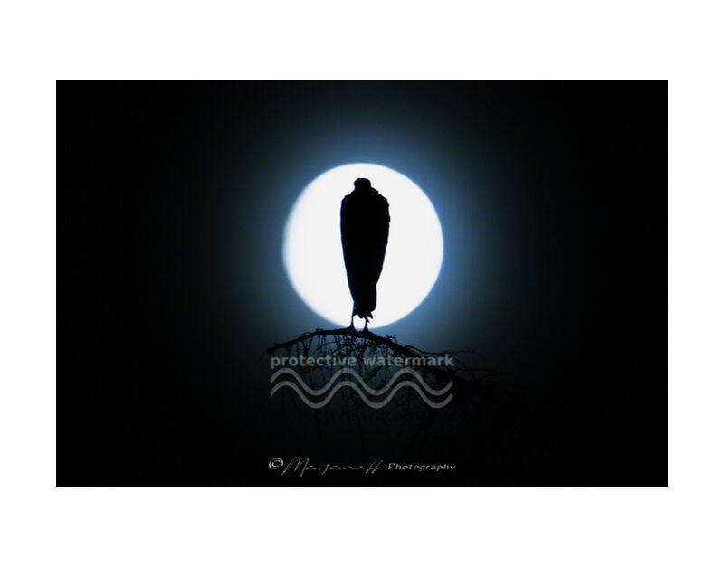 Silouhette au clair de lune de Mayanoff Photography, Prodi Art, pleine lune, arbre, cigogne, oiseaux, animaux sauvages, nuit, clair de lune