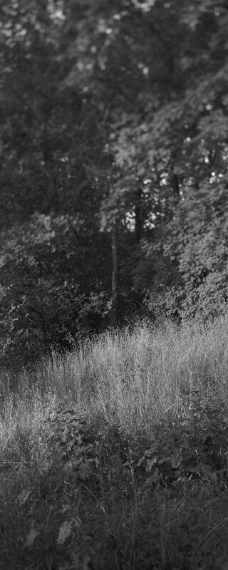 La montagne est dans mon jardin 9 de jean michel RENAUDIN Decor Image