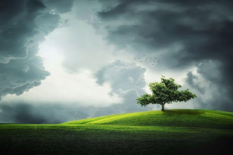 L'arbre de Pierre Gaultier Decor Image