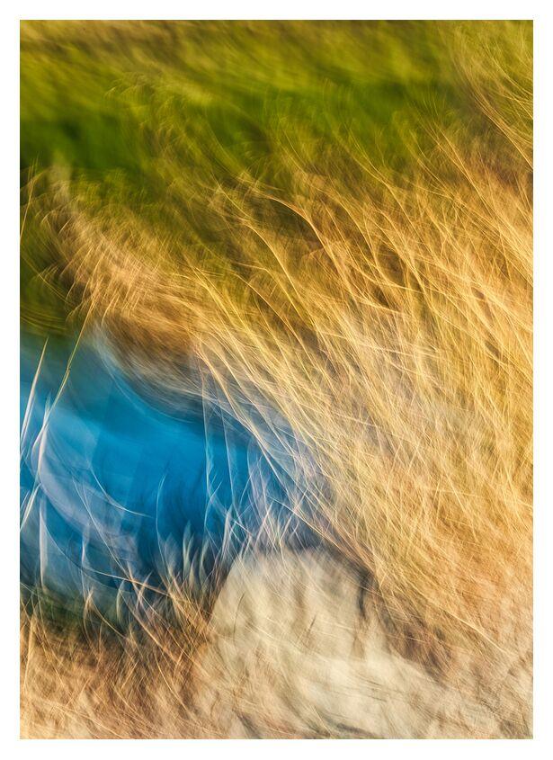 Herbe et salin de Céline Pivoine Eyes, Prodi Art, paysage marin, paysage, fleurs, plante, Salin, bleu, nature, Photographie abstraite, art abstrait, flou artistique, Mouvement intentionnel de la caméra, ICM, Graminée