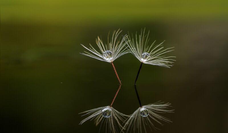 Nature paisible de Pierre Gaultier Decor Image