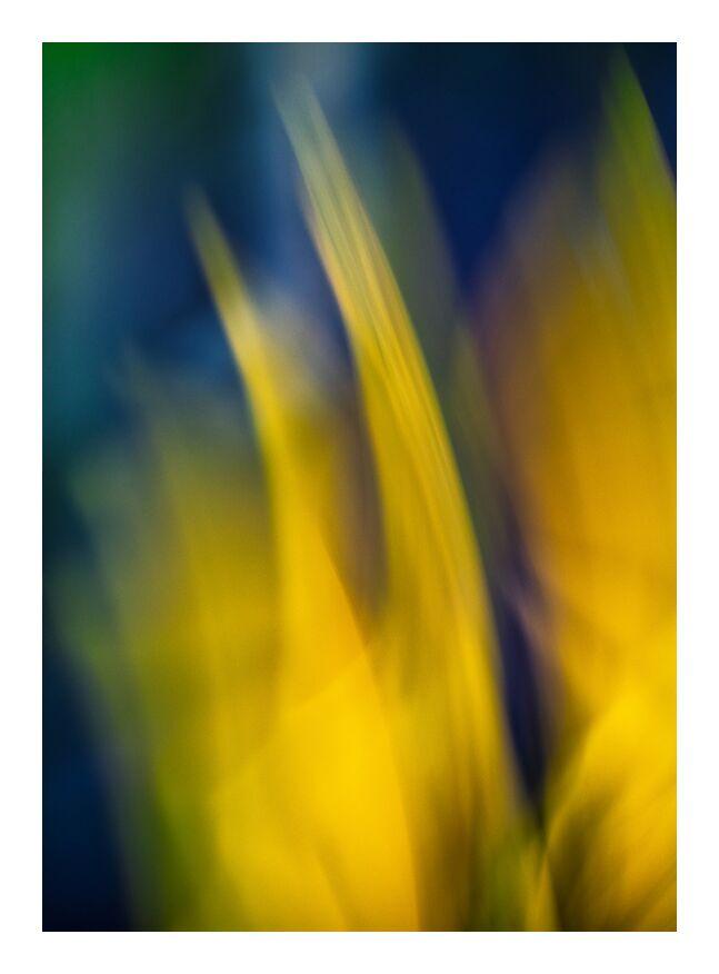 Le jaune fleurs de Céline Pivoine Eyes, Prodi Art, Photographie abstraite, art abstrait, ICM, plante, jaune, nature, fleurs, Mouvement de caméra intentionnel ICM