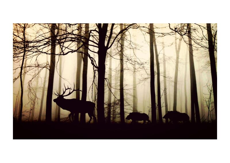 Silhouette of the forest from Pierre Gaultier, Prodi Art, forest, fog, hirsch, wild boars, nature, animals, trees, winter, mood, back light, winter trees, silhouette, atmosphere, shadow, cold, silent, wild animals