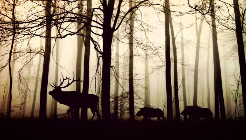 Silhouette de la forêt de Pierre Gaultier Decor Image