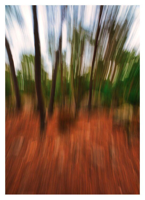 Les fougères de Céline Pivoine Eyes, Prodi Art, Voyage, paysage, nature, Fontainebleau, fougères, arbre, forêt, Photographie abstraite, art abstrait, flou artistique, Mouvement de caméra intentionnel ICM, ICM