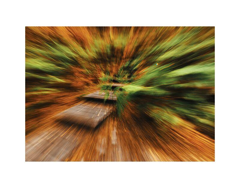 Escalier en forêt de Céline Pivoine Eyes, Prodi Art, forêt, Fontainebleau, fougères, automne, nature, paysage, Voyage, ICM, Mouvement intentionnel de la caméra, flou artistique, art abstrait, Photographie abstraite