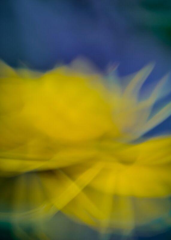 La fleur jaune de Céline Pivoine Eyes Decor Image