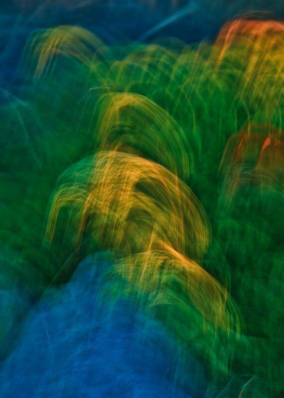 Les graminées colorées de Céline Pivoine Eyes Decor Image