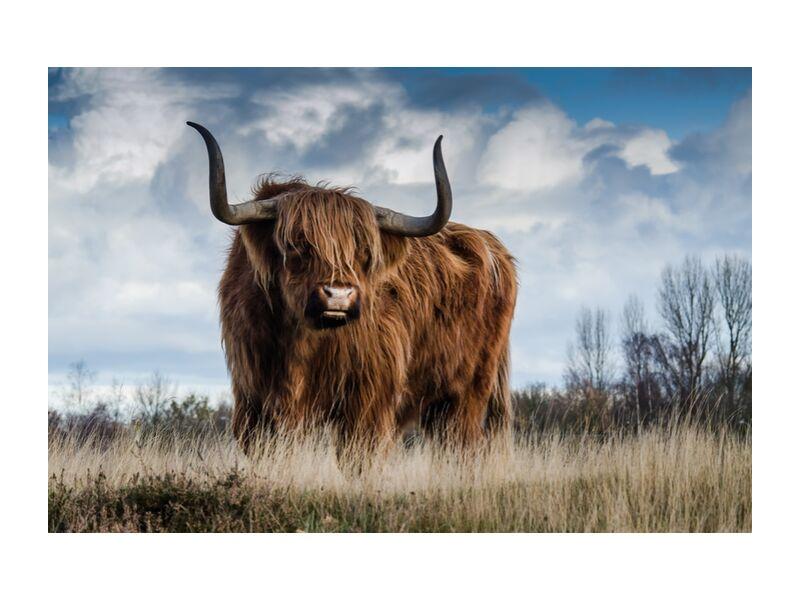 The buffalo meadow from Pierre Gaultier, Prodi Art, farm, cattle, meadow, animal, mammal, nature, landscape, bull