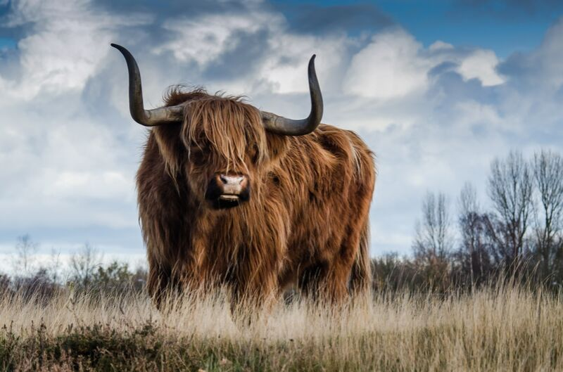 The buffalo meadow from Pierre Gaultier Decor Image
