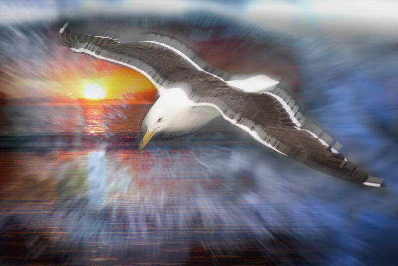 Flight of a seagull from Adam da Silva Decor Image