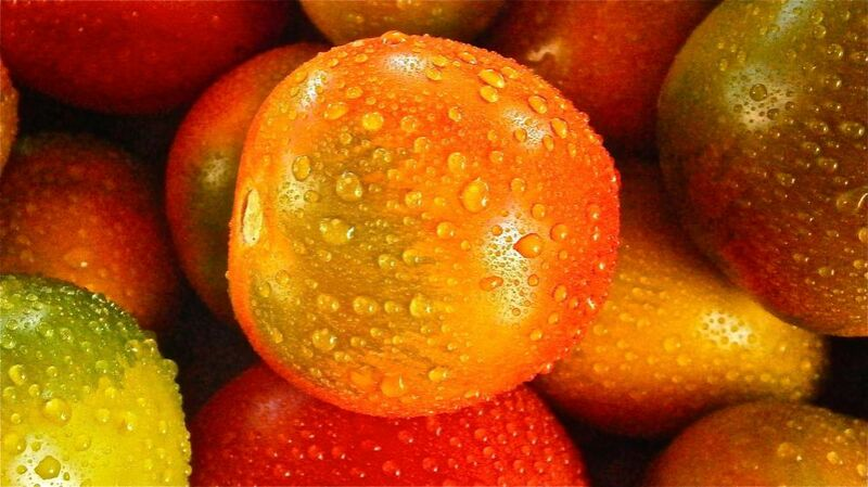 Wet tomatoes from Pierre Gaultier Decor Image