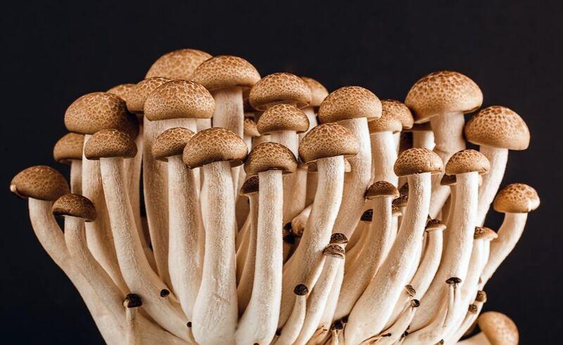 Nos champignons de Pierre Gaultier Decor Image