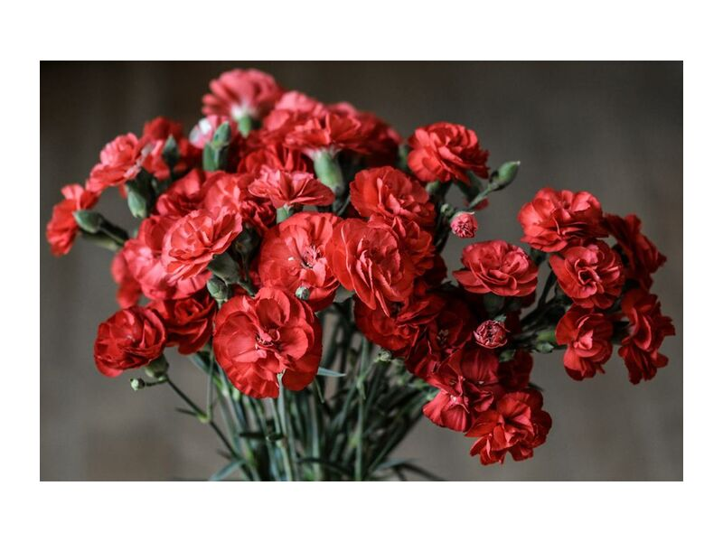 Bouquet of roses from Pierre Gaultier, Prodi Art, stalk, seasonal, romantic, red, petals, love, gift, flowers, flora, decoration, color, close-up, carnation, buds, bunch, flower, blooming, bloom, beautiful
