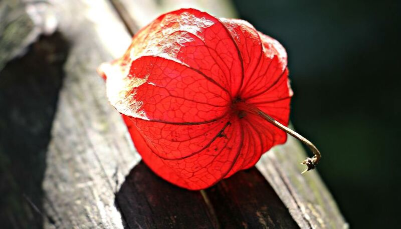 Lampion of flower from Pierre Gaultier Decor Image