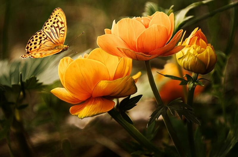 The butterfly and its plant from Pierre Gaultier Decor Image