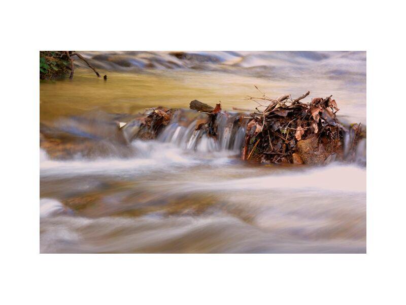 Automne en cours de Frédéric Traversari, Prodi Art, mouvement, automne, ruisseau