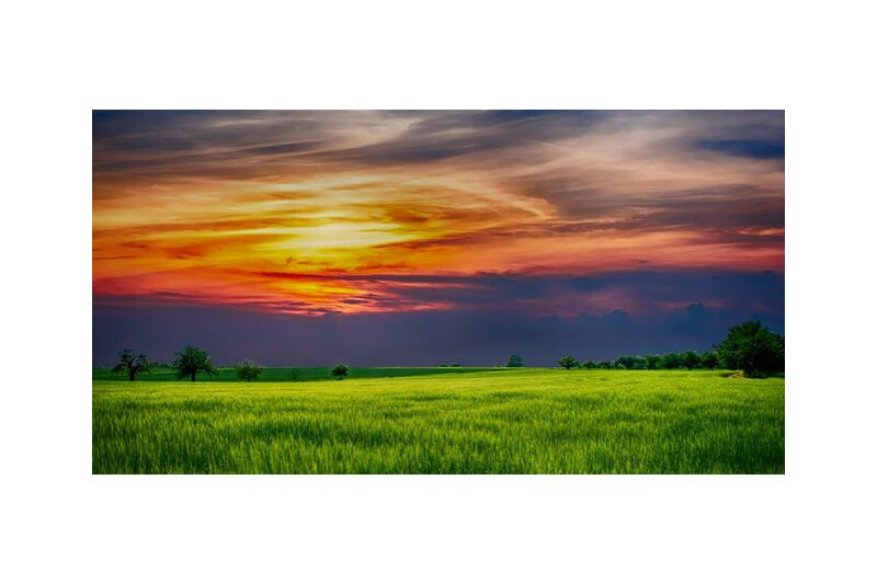 شمس الغروب from Aliss ART, Prodi Art, trees, sunlight, Sun, sky, scenic, rural, outdoor, nature, landscape, growth, grass, field, farmland, cropland, countryside, country, clouds, agriculture