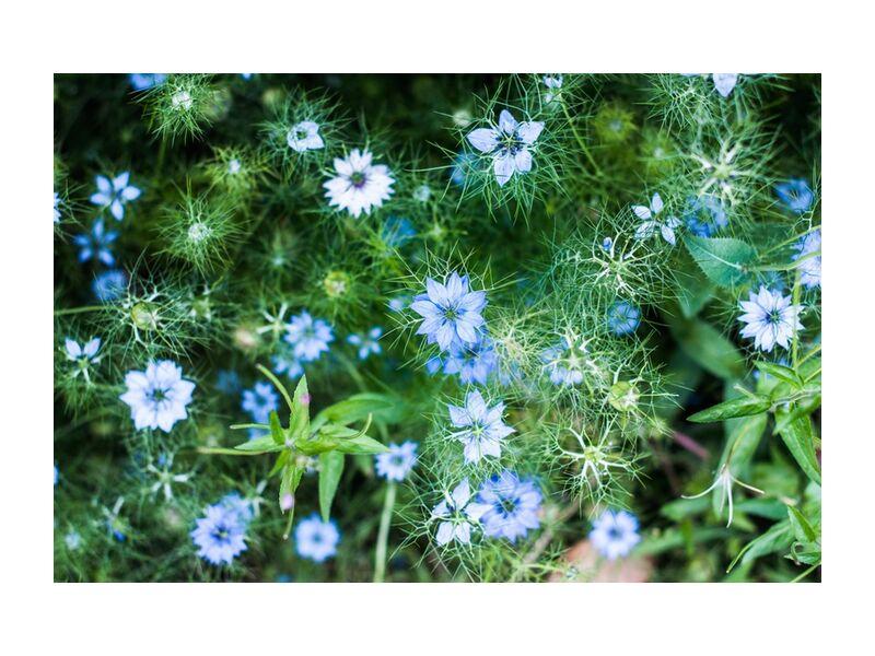 Blue flowers from Marie Guibouin, Prodi Art, green, flowers, nature, marie guibouin, blue flower