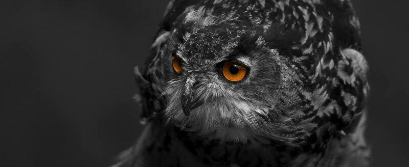 Owl's eyes from Pierre Gaultier Decor Image