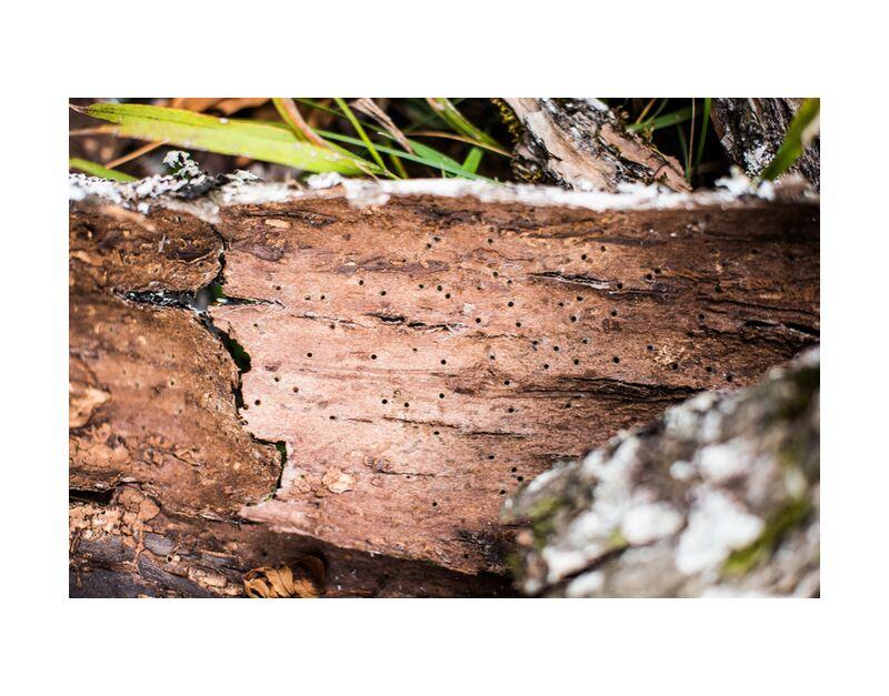 Breakable de Marie Guibouin, Prodi Art, marie guibouin, écorce, nature, arbre, bois