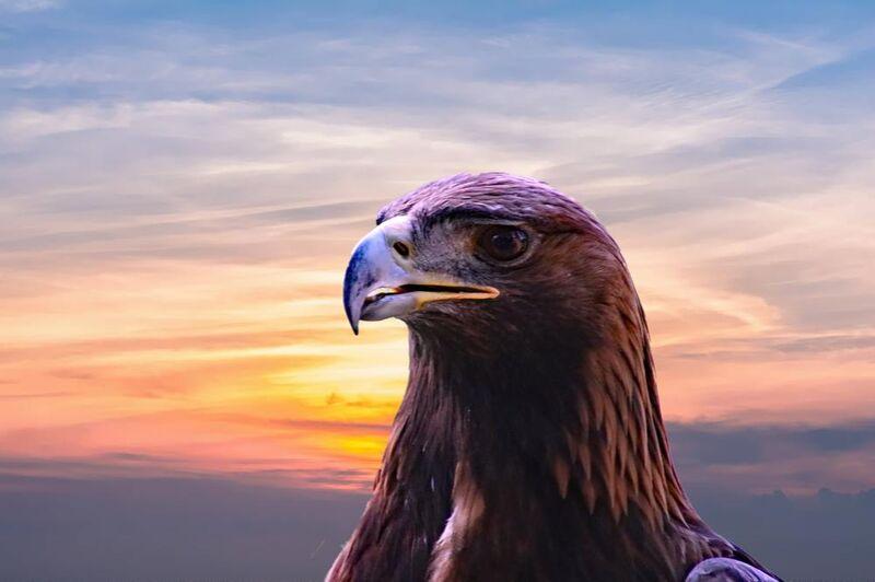 Tête de l'aigle de Pierre Gaultier Decor Image