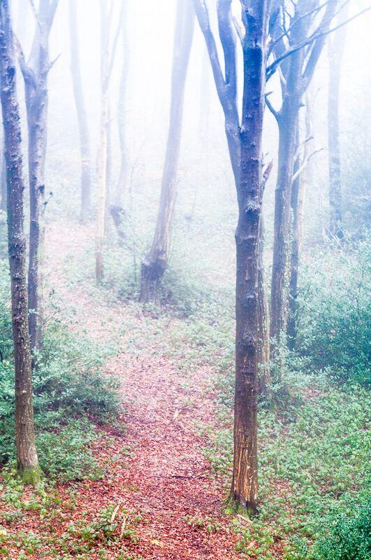 Dans les bois de Marie Guibouin Decor Image