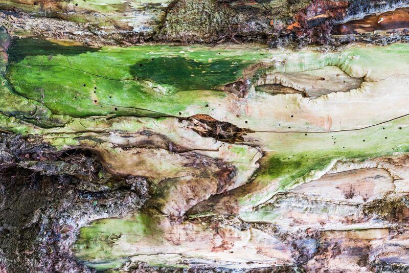 Le bois vert de Marie Guibouin Decor Image