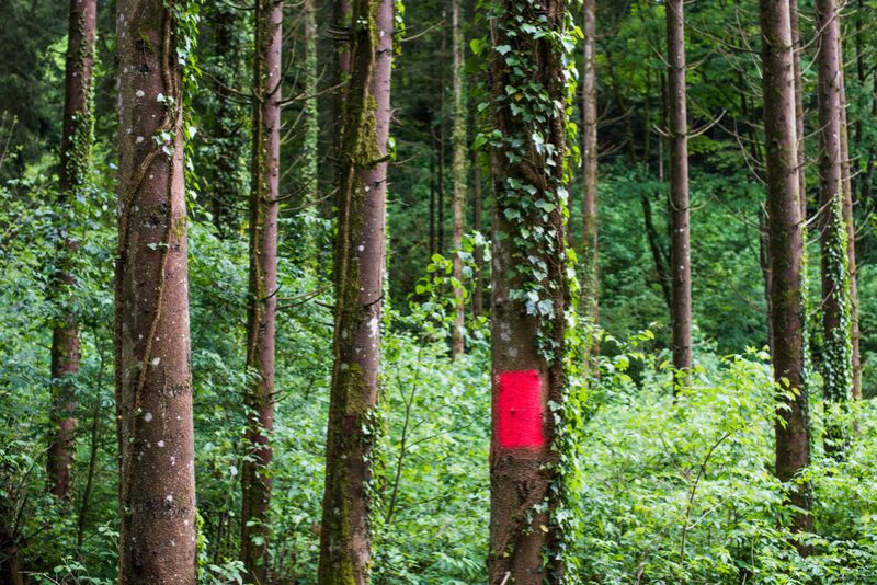 Zone rouge de Marie Guibouin Decor Image