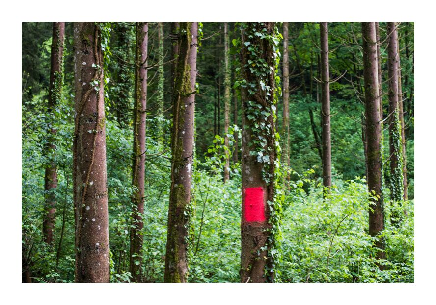 Zone rouge from Marie Guibouin, Prodi Art, nature, trees, green, hiking, marie guibouin, wood, forest, red